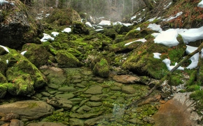 greens, moss, river, water, forest, snow, stones