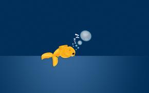background, sleeps, goldfish, bubbles