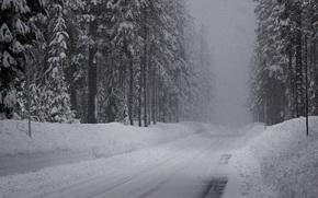 invierno, carretera, nieve, bosque de abetos