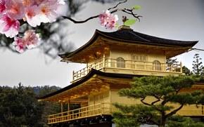 цветение, крыша, сакура, дерево, розовые, цветы, ветка, Япония, вишня