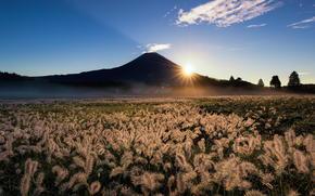 вулкан, гора, колосья, Фудзи, Япония, Фудзияма, солнце, лучи, поле, природа, трава, небо