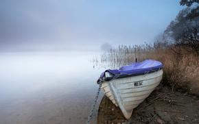葦, 霧, ボート, 湖