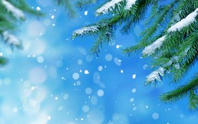 Macro, cold, fir-tree, snow, needles, winter, ice