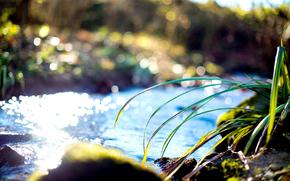 erba, torrente, puntellare, acqua, erba, soleggiato