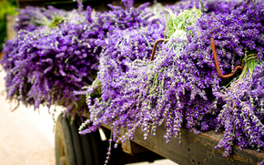 lavender, purple, Flowers, trailer