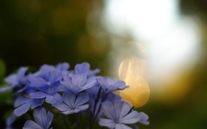 bokeh, Macro, Widescreen, Widescreen, fullscreen, degradation, purple, flowers, Flowers, background, wallpaper