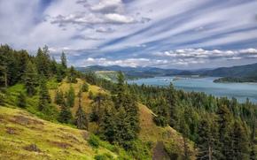 Lago Coeur d'Alene, bosque, árboles, Montañas