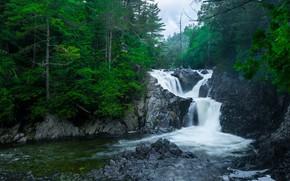 bosque, río, árboles, cascada, naturaleza