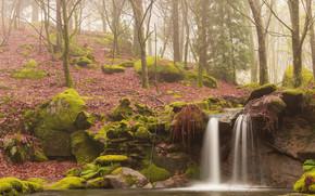 waterfall, forest, fog, FLOW, moss