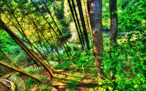 forest, trees, small river, stage, descent, nature