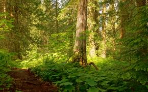 forêt, arbres, nature