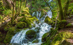 forest, river, waterfall, FLOW, trees, stones, moss, nature