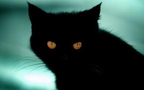 кошка, черный, фон, кот, взгляд