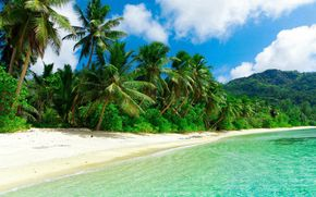 sea, shore, island, ocean, Palms, tropics, beach, sand, sun