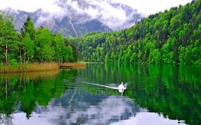 Mountains, clouds, lake, forest, trees, swan