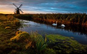 tramonto, pond, mulino, Cigni, paesaggio