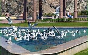 animales, pájaros, GAVIOTAS, agua, levante en
