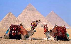 animales, Camellos, camello, Egipto, pirámides, peyzazhy.folklerr