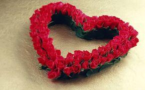 разное.розы, роза.цветы, праздники, Настроение