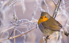 animales, pájaros, invierno, pájaro