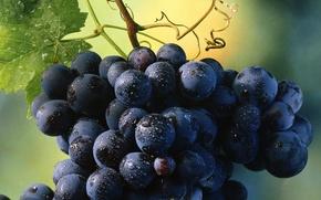 raznoe.eda, grapes, fruit