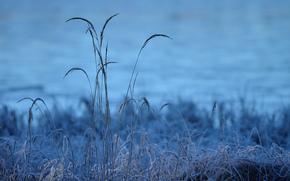朝, 霜, 霜, 寒い, 草, 草