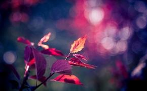 листья, фон, листик, полноэкранные, фиолетовый, дерево, широкоформатные, листочек, боке, размытие, широкоэкранные, обои, розовый, макро