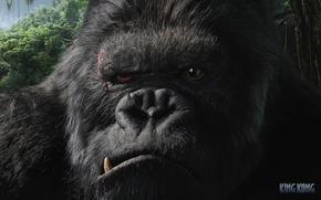 животные, горилла, обезьяна, Кинг-Конг, из фильмов, фильмы