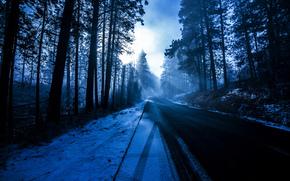 inverno, stradale, foresta, natura, nevicata, Verge, azzurro, Raggi, alberi, sole