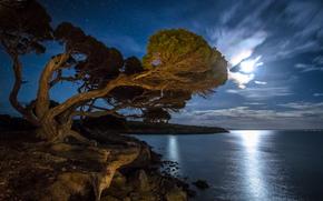 海湾, 明星, 海滩, 夜, 树, 月光