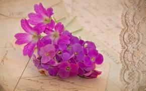 letters, lilac, geranium, Flowers, Cards, Vintage