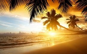 sunset, Palms, sand, shore, beach, sea, tropics