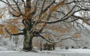 natureza, neve, outono, árvore