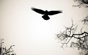 bird, silhouette, swing, flight, WEBO Software, shape, BRANCH, circuit, background, wings