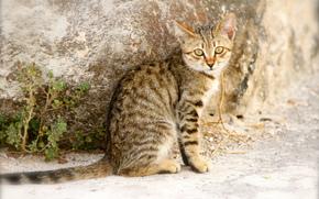 Gray, wall, view, kitten, striped, street