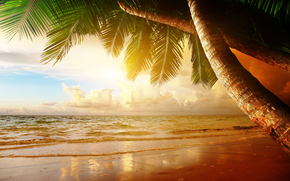 sand, sunset, Palms, tropics, shore, sea, beach