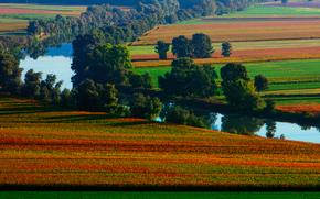 природа, поля, лето, река