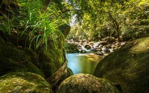 森林, 性质, 石头, 苔