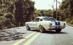 Car, stradale, ford, ct, Olio, ford, Shelby