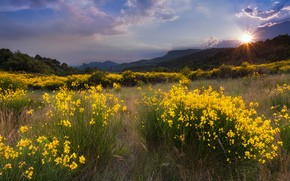 clouds, sun, grass, trees, sunset, yellow, landscape, glade, Flowers, nature, Mountains