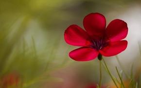 обои, фон, цветы, полноэкранные, цветок, цветочек. розовый, размытие, широкоформатные, широкоэкранные