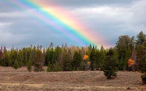 медведь, лес, радуга, осень