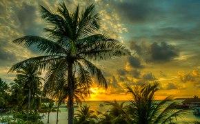 马尔代夫, 日落, 海, 棕榈