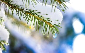 капля, макро, зима, ель, снег, елка