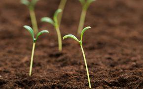 land, background, sprout, fullscreen, Green, Widescreen, Macro, wallpaper, Widescreen