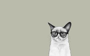 Angry Cat, minimalism, Sauce Tardar, COTE, glasses, cat
