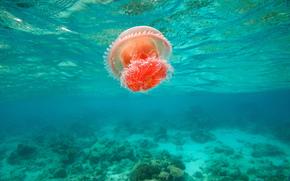 филиппины, море, медуза, течение, яркая