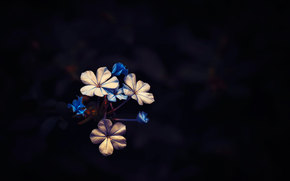 ❀, flowers, background