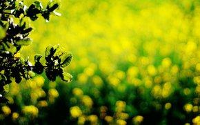background, leaves, Widescreen, foliage, wallpaper, Macro, fullscreen, Green, bokeh, dark green, yellow, Widescreen