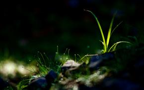 gotas de agua, rocío, hierba, deslumbramiento